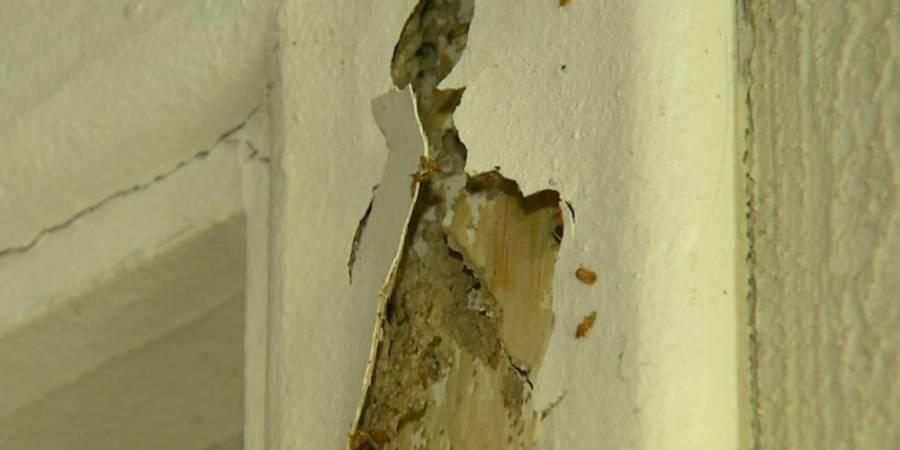 Donos de apartamentos pedem solução a construtora após danos causados por cupins em Ribeirão Preto